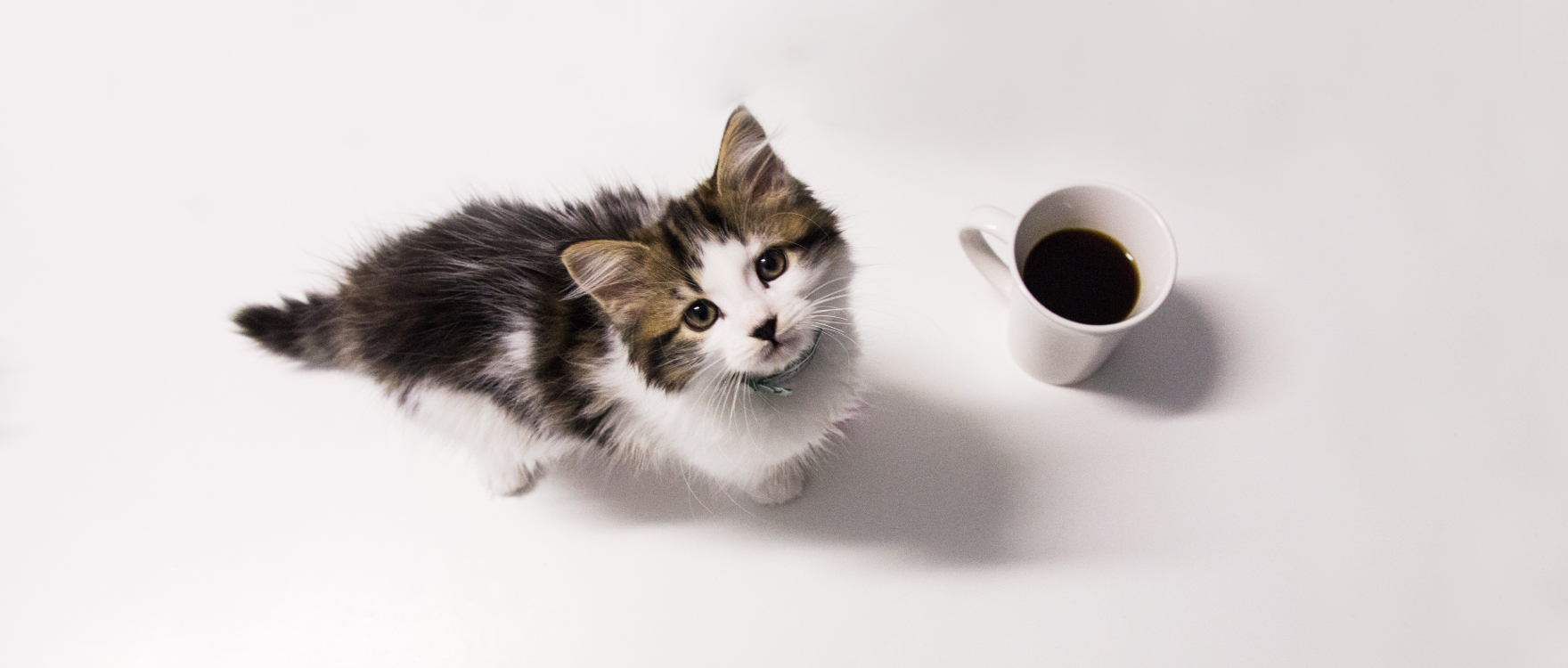 Workplace Giving Banner Image Kitten Looking up into Camera next to a coffee cup on an office desk