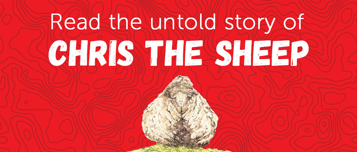 The untold story of Chris the Sheep