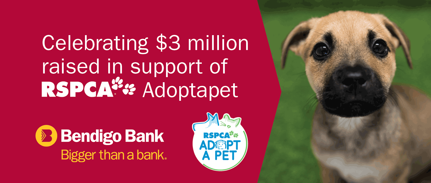 Celebrating $3 million raised in support of RSPCA Adopt-a-pet