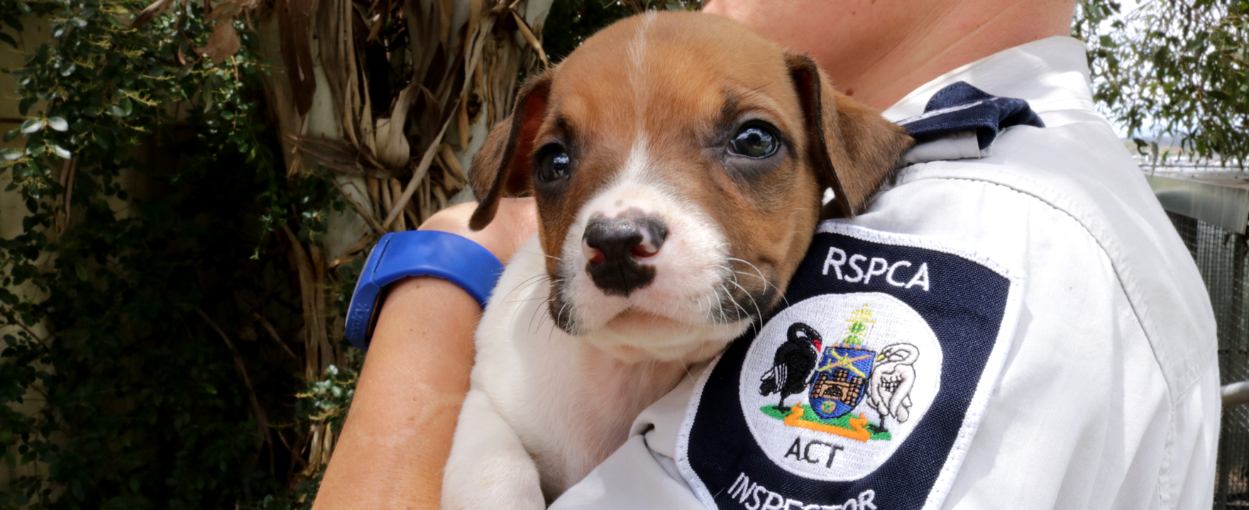 RSPCA ACT Inspector and puppy