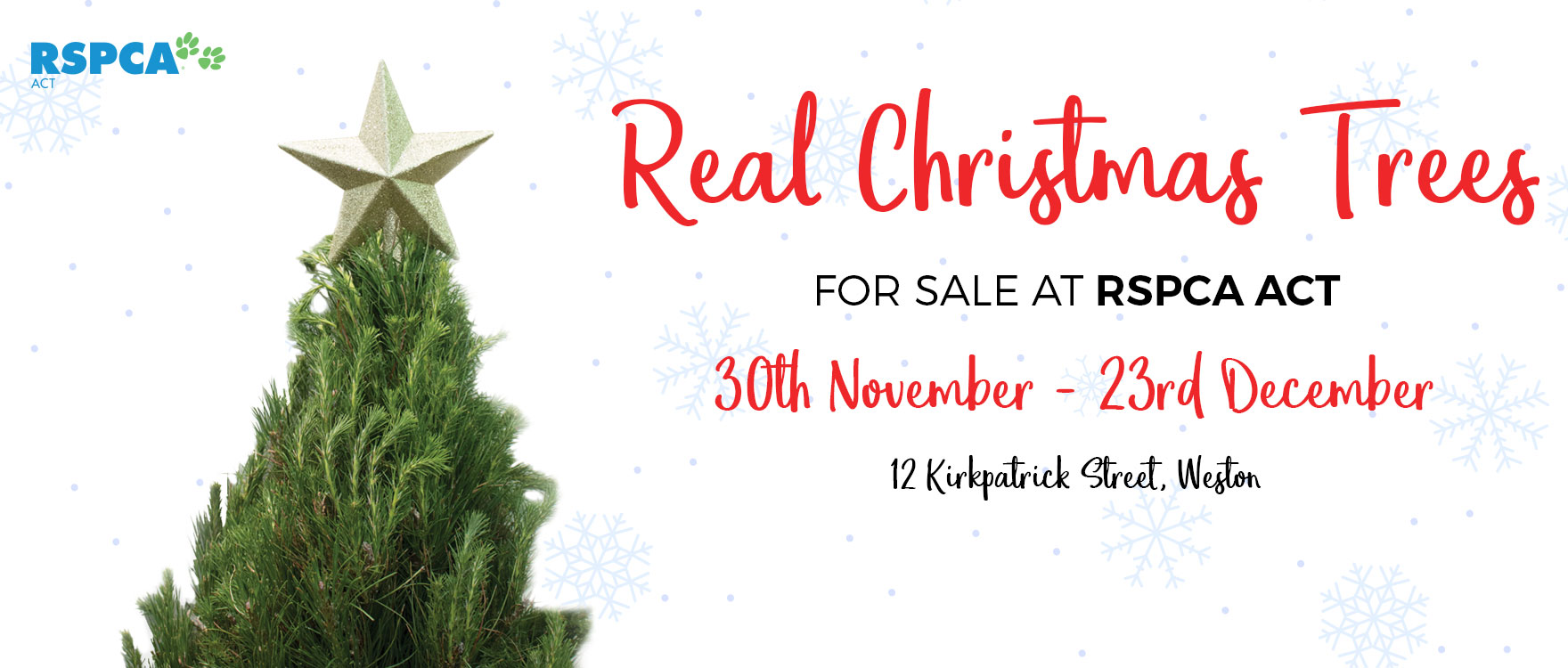 Real Christmas Trees for Sale at RSPCA ACT