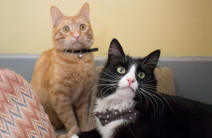 Nala and Ligi are looking for their fur-ever home