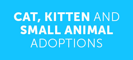 Cat, Kitten and Small Animal Adoptions