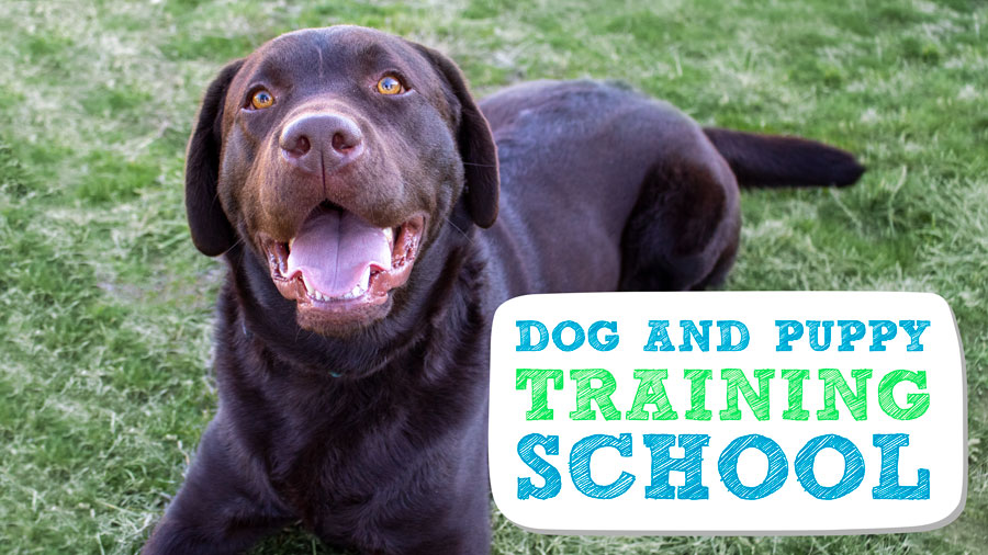 Dog and Puppy Training School