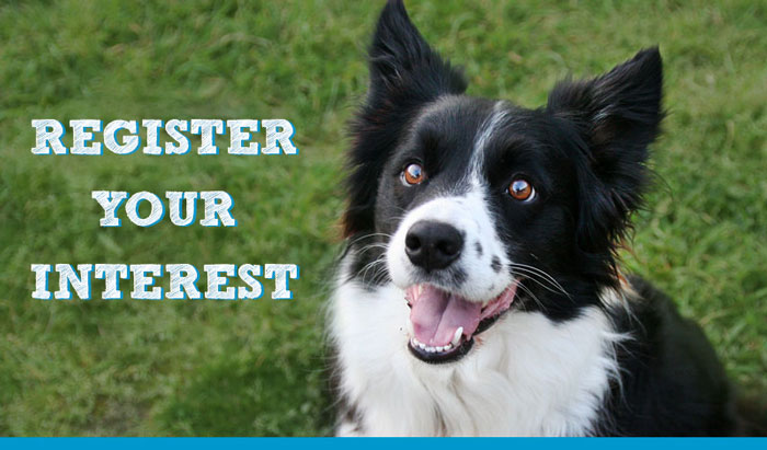 Register your Interest for Dog Training