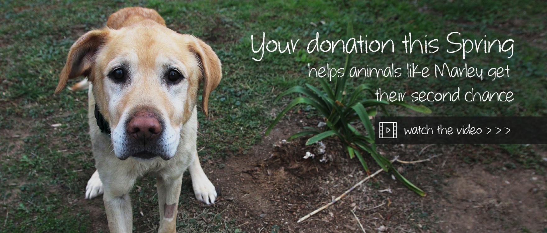 This Spring Help Animals Like Marley