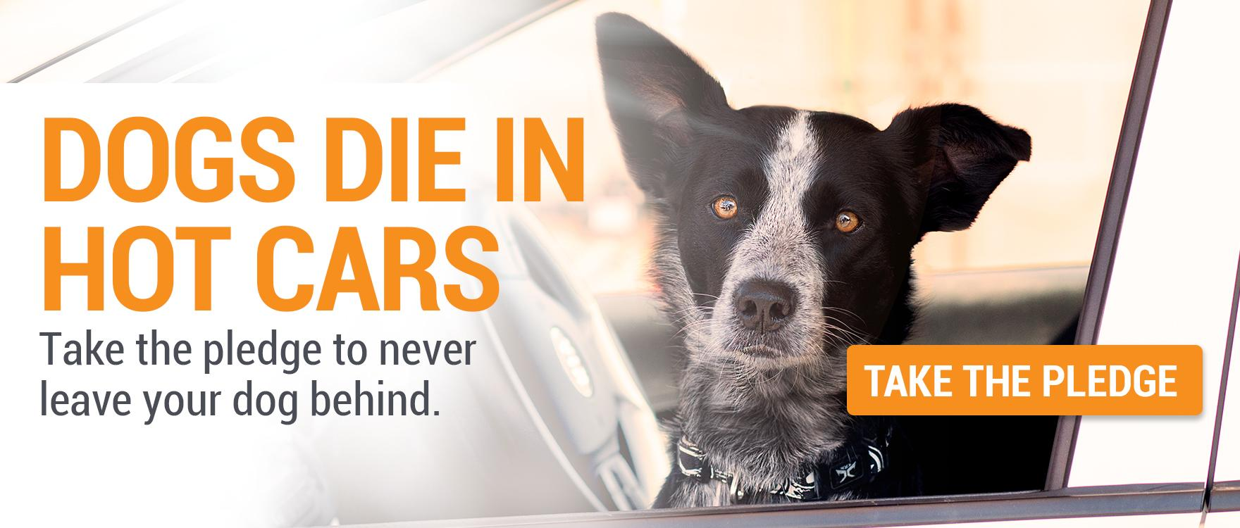 Dogs Die in Hot Cars -  It Only Takes Six Minutes