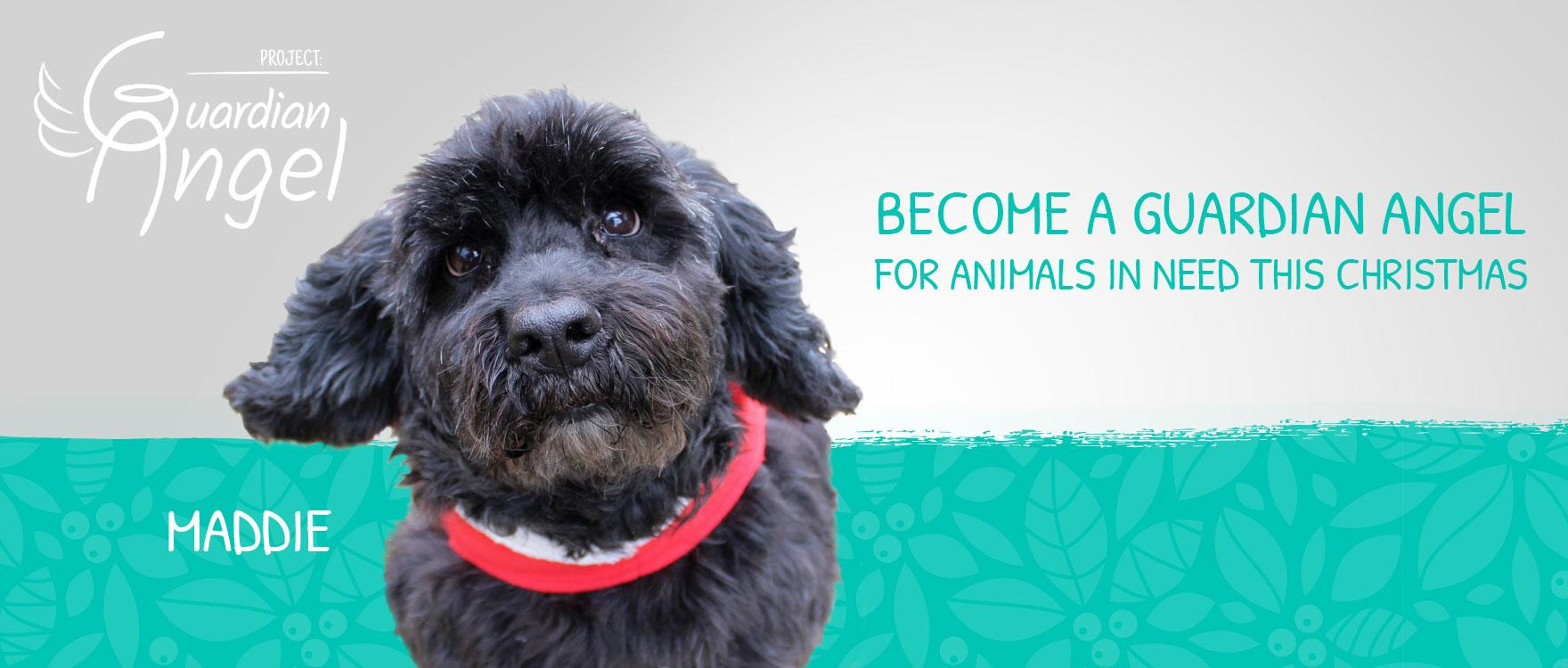 Become a Guardian Angel for animals in need this Christmas