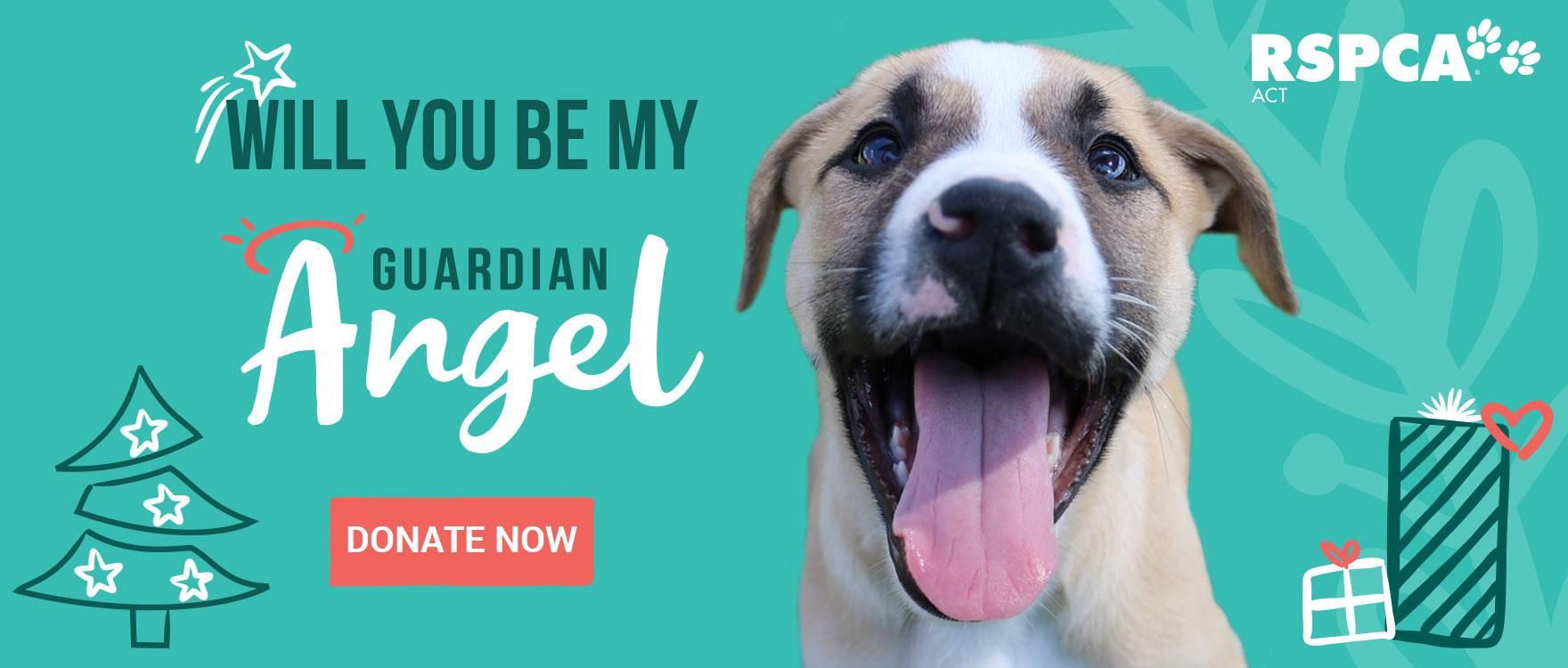 Become a Guardian Angel and help animals like Marty