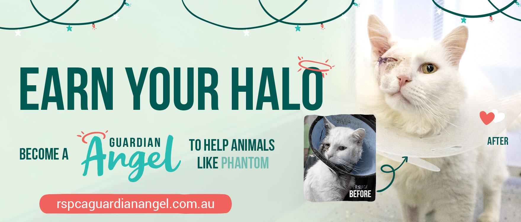 Become a Guardian Angel for an animal in care